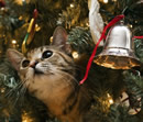 Christmas Tree Cat TellingTAILS Pet Supplies Grooming Chelmsford